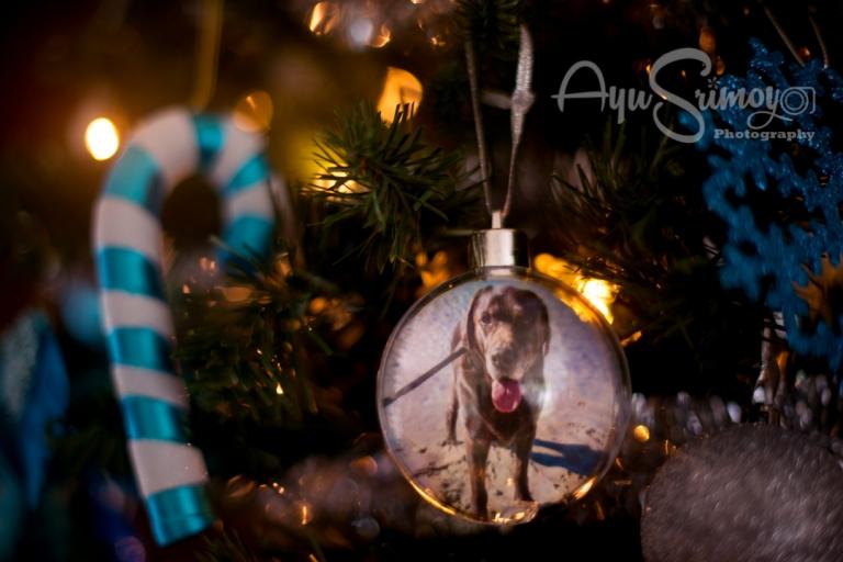 christmas 2017, ayu srimoyo photography, chocolate labrador