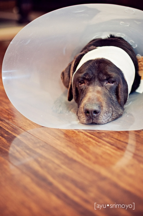 dog and his cone